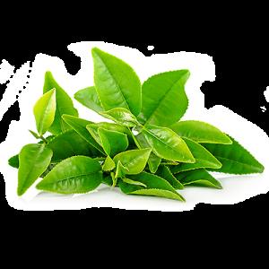 8-green-tea